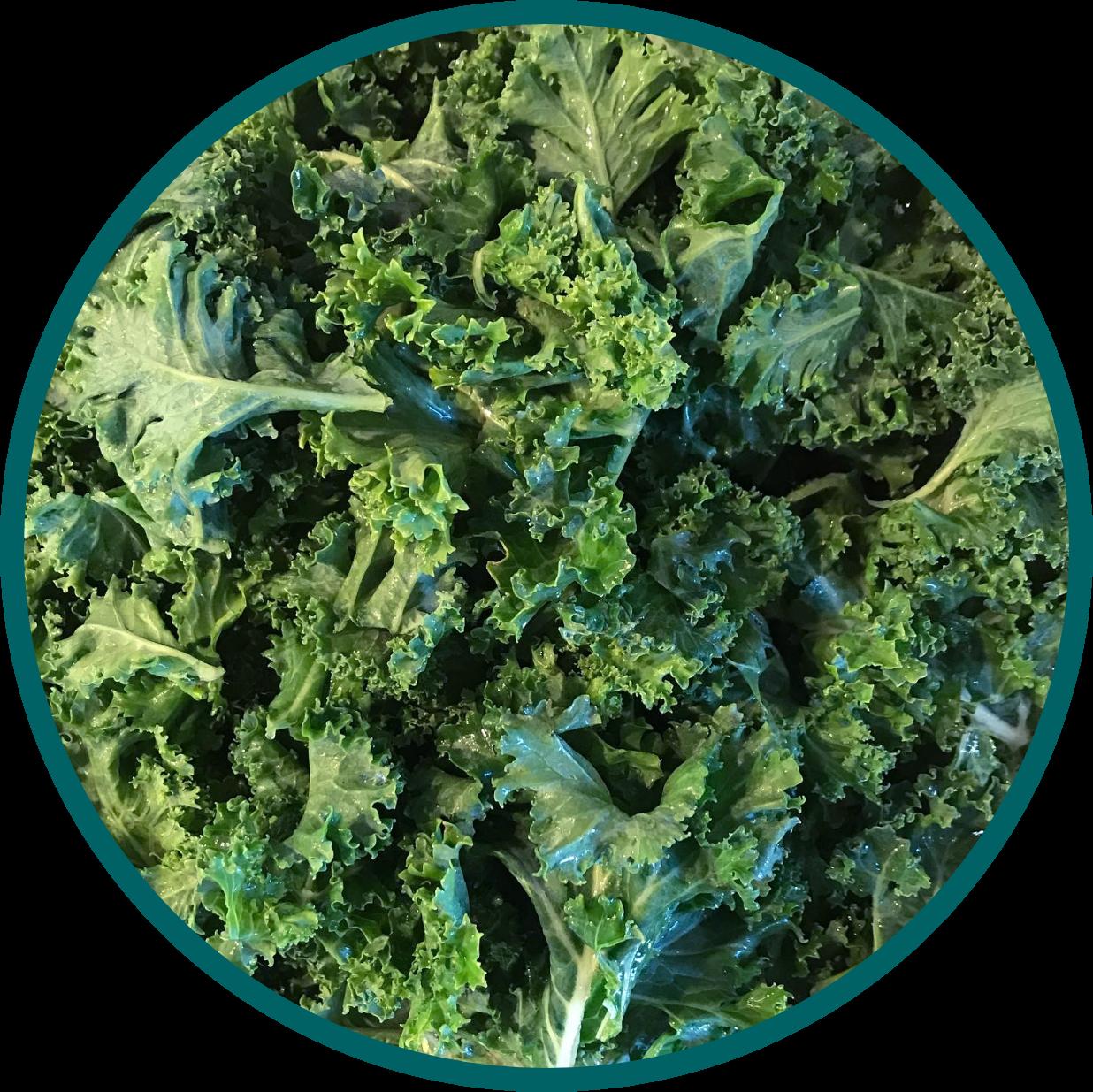 plantiful kale